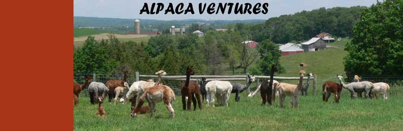 Alpaca Ventures Link Resources Page Alpaca Resources Alpaca